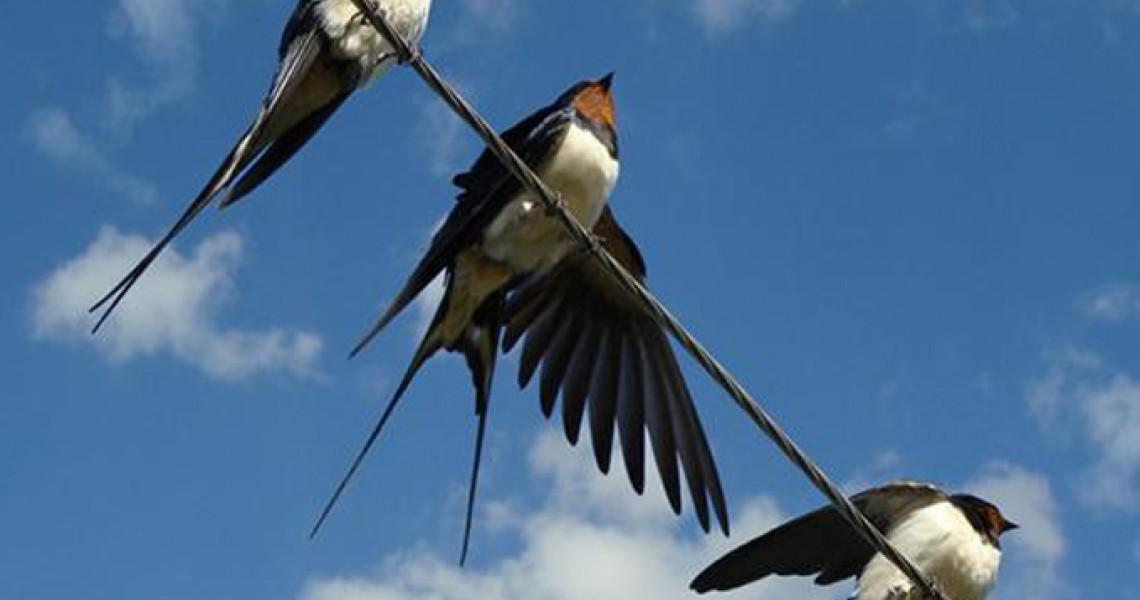 Καυτά κορίτσια πιπίλισμα μεγάλο πουλί